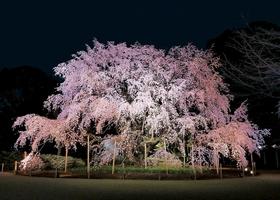 리쿠기엔 정원