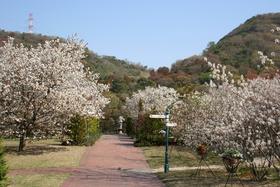 Miyama Park