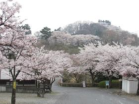 樱山公园(群马县)