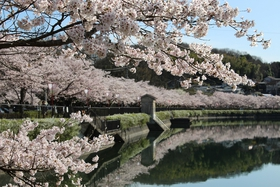 Ueno Park, Shobara City