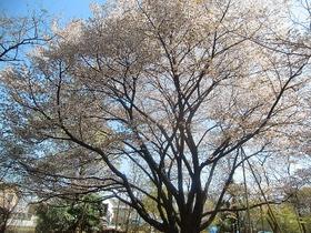 石神井公园