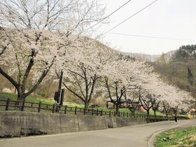 Odate Beniyamasou Nature Park