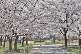 Onishi Park