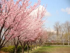 Kuroishi City Azuma Park
