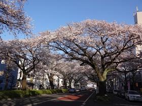 Heiwa-dori Street