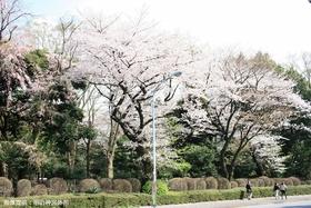 Meijijingu GaienPark