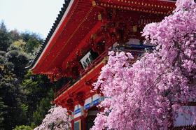 The temple of winner's luck – Katsuo-ji Temple