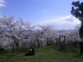 西行桜の森