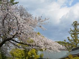 寒川神社の表参道と境内