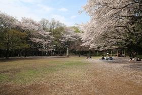 城山公園(神奈川県)