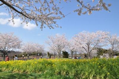 成田市さくらの山 image