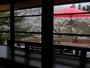桜と2階テラス