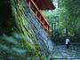 歴史薫る比叡の森、四季折々の自然を訪ねて