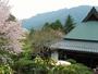 当館前の山桜