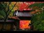 永源寺の紅葉(休暇村より3km 約50分)