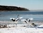 *風連湖/躍動感あふれる写真。間近で野鳥や自然を感じられるのも、自然の宝庫根室ならでは!