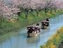 水郷めぐり 春