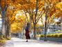 【秋】ホテル周辺の銀杏やメタセコイヤの並木が綺麗に色づきます。