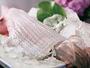 透き通った身の活イカの姿造り。食感を楽しんで!