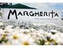 2012年3月OPEN。海と空とマーガレットに癒される島旅