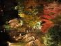色鮮やかにライトアップされる夜の庭園はロマンチックで幻想的な雰囲気♪