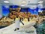 当館はペンギン村のある海響館へ徒歩圏内の立地♪※優待券あり