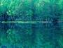 美しい木々が水面に映る神秘の池「御射鹿池」までは車で5分