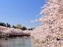 【弘前さくらまつり】界津軽のある大鰐温泉は弘前まで最短10分の好アクセス