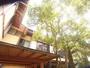 玄関×槙の木がのびのびと光に向かって伸びゆく様。