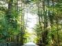 旧軽井沢の別荘地にいちするから散策満喫できます