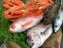 のどくろや鯛、おこぜなど、地魚がいっぱい!