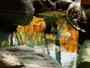 【野趣あふれる露天風呂】猿ヶ京の湯に映る紅葉