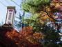 秋には紅葉を満喫できます!