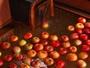 【冬季限定 魔法のりんご風呂】温泉に溶け出た成分と甘酸っぱい香りが、身体も心も綺麗にしてくれます。