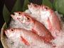 山陰を代表する高級魚「のどぐろ」 イメージ