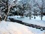 自然豊かな立地から、紫尾庵でも一面、真っ白い雪景色となりました。