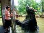 【ベア・マウンテン】大きなヒグマとご対面。その距離4cm!