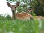 すぐそこが奈良公園、こんなかわいい鹿さんに出会えます。