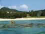 とかしくビーチのウミガメ(2)
