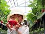 【いちご狩り】大切に育てられたおっきなイチゴ♪♪もぎってそのまま♪♪