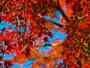 【紅葉の季節】木々たちが色づく季節になりました。※写真はイメージです。