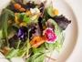 ご夕食一例/フレッシュな野菜を彩りよく盛り付けて