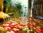 1日5組限定!人気の貸切り露天『天水』に花びらを浮かべて【40分/回・2,160円(2-3名様利用)