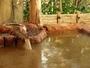 大浴場【瑞泉】 緑豊かな庭園をのぞむ露天風呂