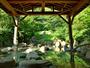 【大露天風呂 夏】緑に囲まれた大露天風呂