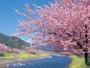 【河津桜】伊東から車で約1時間。早春にぜひ訪れていただきたい桜の名所です
