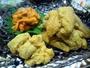 生ウニ三種盛り・ボリュームたっぷり!・三種類の生ウニの食べ比べ、味比べが楽しめます
