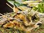 【鮎塩焼き】  ・淡水魚の王様と称される「鮎」をアツアツの塩焼きで。