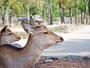 奈良公園まですぐそこ♪たくさんの鹿と出会う事ができます。
