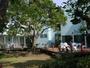 中庭のヤマモモの巨木